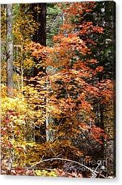 Fall Colors 6412 Acrylic Print