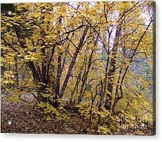 Fall Colors 6435 Acrylic Print