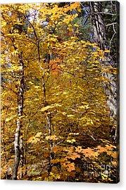 Fall Colors 6446 Acrylic Print