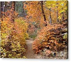 Fall Colors 6454 Acrylic Print