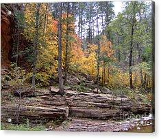 Fall Colors 6463-02 Acrylic Print