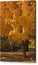 Fall Colors Acrylic Print by Adam Romanowicz