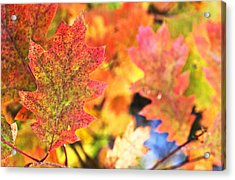 Acrylic Print featuring the photograph Fall Colors by Arkady Kunysz