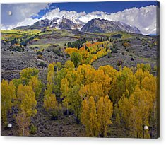 Fall Colors At Chair Mountain Colorado Acrylic Print by Tim Fitzharris