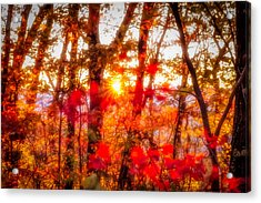 Fall Colors Acrylic Print by David Cote