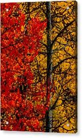 Fall Colors Dp 1 Acrylic Print