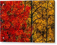 Fall Colors Dp Acrylic Print