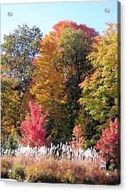 Fall Colors Acrylic Print by Gaetano Salerno