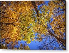 Fall Colors In The Sky  Acrylic Print by LeeAnn McLaneGoetz McLaneGoetzStudioLLCcom