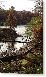 Acrylic Print featuring the photograph Fall Colors by J L Zarek