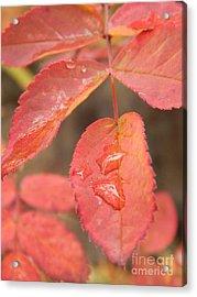Fall Colors Acrylic Print by Jennifer Kimberly