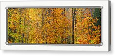 Fall Colors Acrylic Print by John Bushnell