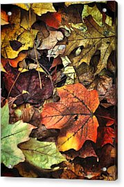 Fall Colors Acrylic Print by Lyle Hatch