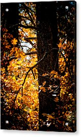 Fall Colors Acrylic Print by Mickey Clausen