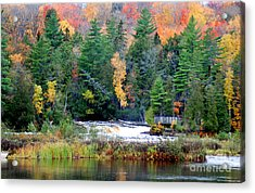 Fall Colors On The  Tahquamenon River   Acrylic Print by Optical Playground By MP Ray