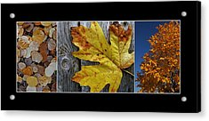 Fall Colors Triptych Acrylic Print