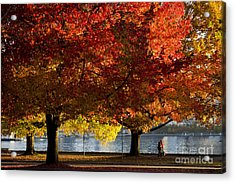 Fall Colour In Stanley Park Acrylic Print