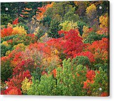 Fall Colours In Gatineau Park Quebec Acrylic Print