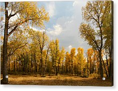 Acrylic Print featuring the photograph Fall Cottonwoods In Gros Ventre by Jeremy Farnsworth