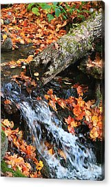Acrylic Print featuring the photograph Fall Creek by Alicia Knust