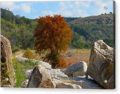 Fall Cypress Acrylic Print by David  Norman