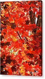 Acrylic Print featuring the photograph Fall by David Perry Lawrence