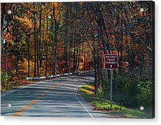 Fall Drive In Tennessee  1 Acrylic Print