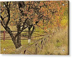 Acrylic Print featuring the photograph Fall Fenced by Tonia Noelle