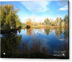 Fall Flight Reflected Acrylic Print
