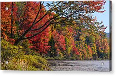 Fall Foliage At Elbow Pond Acrylic Print