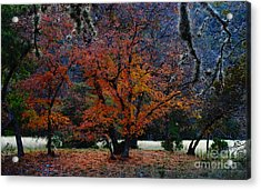 Fall Foliage At Lost Maples State Park  Acrylic Print