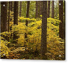 Acrylic Print featuring the photograph Fall Foliage by Belinda Greb