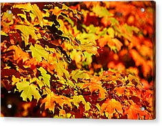 Acrylic Print featuring the photograph Fall Foliage Colors 13 by Metro DC Photography