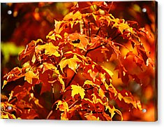 Fall Foliage Colors 14 Acrylic Print