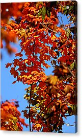 Acrylic Print featuring the photograph Fall Foliage Colors 15 by Metro DC Photography