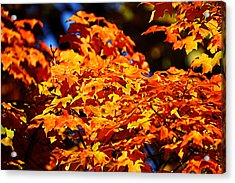 Fall Foliage Colors 16 Acrylic Print
