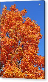 Acrylic Print featuring the photograph Fall Foliage Colors 18 by Metro DC Photography