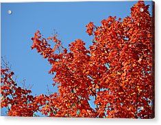 Fall Foliage Colors 20 Acrylic Print