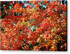 Fall Foliage Colors 22 Acrylic Print