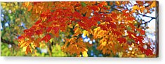 Fall Foliage, Guilford, Baltimore City Acrylic Print by Panoramic Images