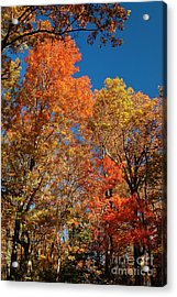 Acrylic Print featuring the photograph Fall Foliage by Patrick Shupert