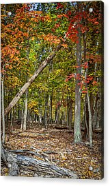 Fall Forest Acrylic Print by David Cote