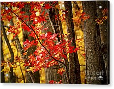 Fall Forest Detail Acrylic Print by Elena Elisseeva