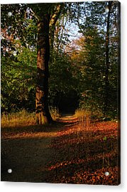Fall Forest Acrylic Print