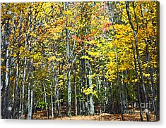 Fall Forest Mm Acrylic Print