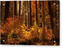 Fall Forest  Acrylic Print by Saija  Lehtonen