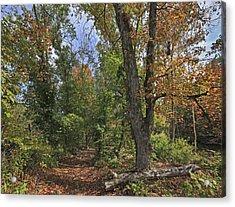 Fall Forest Trail Ozark-saint Francis Acrylic Print by Tim Fitzharris