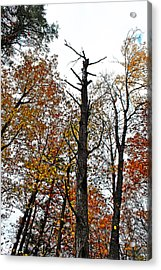 Fall Forrest Acrylic Print by Stephanie Grooms