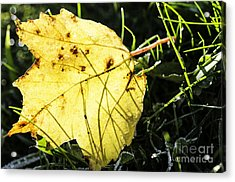 Fall Frost Acrylic Print by Thomas R Fletcher