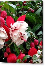 Fall Fuchsia Acrylic Print